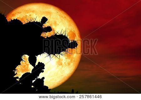 Full Blood Moon Back Silhouette Cactus In Desert Land