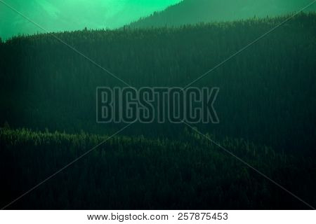 Pine forest trees and mountains wilderness rugged light