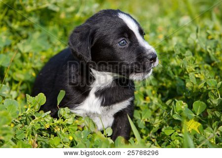 adorable small dog on the green grass
