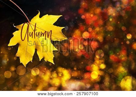 Illustration. Autumn Sale Over Autumn Leaves Fall