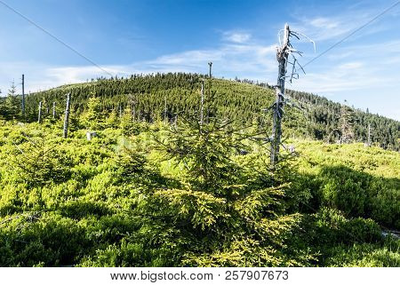 View To Spaleny Vrch Hill From Klinova Hora Hill In Summer Jeseniky Mountains In Czech Republic Abov