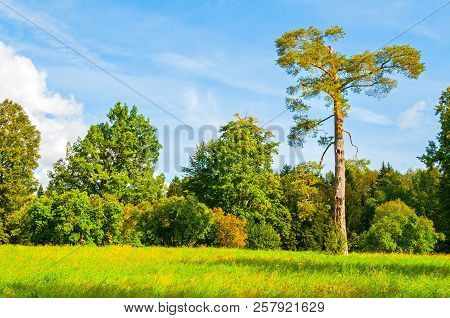 Autumn September landscape - colorful early autumn forest with deciduous autumn trees in sunny weather. Autumn forest landscape scene. Forest autumn trees