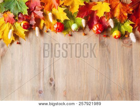 Autumn background. Maple varicolored autumn leaves on the wooden background with free space for text, autumn composition. Colorful autumn leaves on the wooden surface. Autumn border background