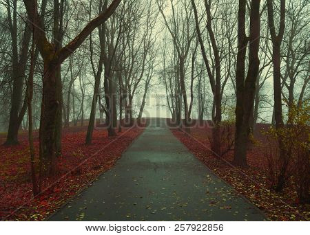 Autumn landscape- foggy autumn park alley with bare trees and dry fallen orange autumn leaves. Mysterious autumn landscape scene, autumn alley in dense fog. Autumn landscape scene