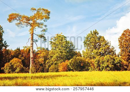 Autumn October landscape - colorful autumn forest with deciduous forest trees in sunny weather. Autumn forest landscape in vintage tones. Forest autumn nature