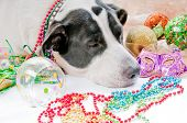 Dog Sick after too much partying poster