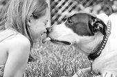 Dog giving girl sweet lick poster