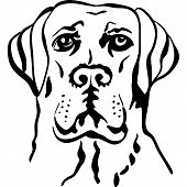 black and white sketch a portrait of a close-up of serious dog breed labrador retrievers poster