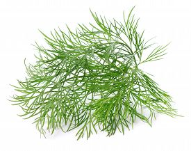 Single Twig Of Fresh Green Dill On White Background