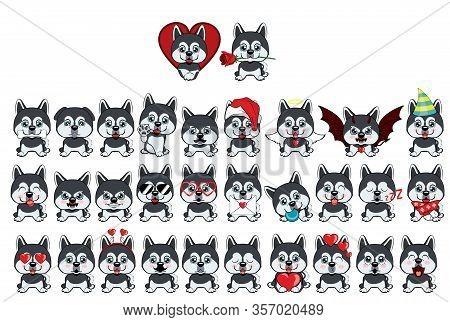 Dog Alaskan Kli Kai Breed Sitting. Big Set Of 31 Different Little Dogs.