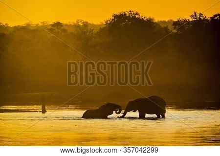 Two African Bush Elephant Taking Bath In Lake At Sunset In Kruger National Park, South Africa ; Spec