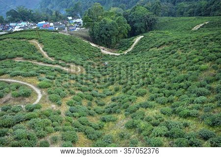 Curved Mountain Road Through Darjeeling Tea Plantations. Winding Road In The Mountains., India