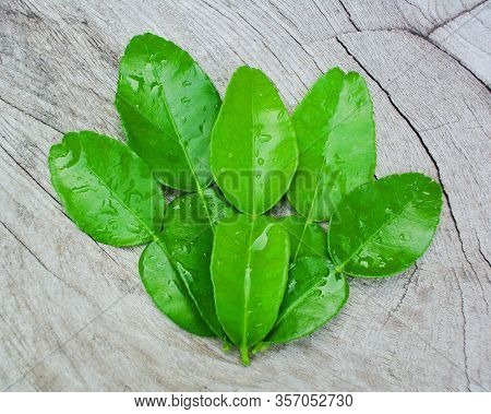 Green  Bergamot Leaf On Wood, Bergamot Leaf, Part Of Hot And Sour Soup.herb For Hair.