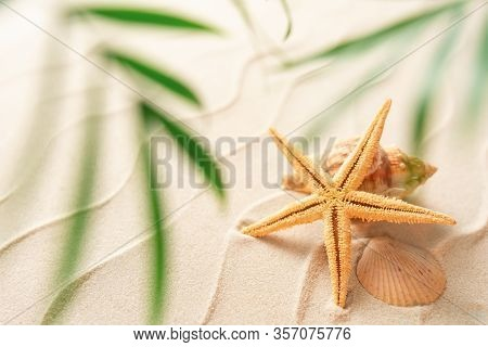 Soft Focus Summer Beach Background With Shell Seastar And Blurred Palm, Vacation And Travel Concept,