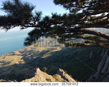 Crimean Pine With Branches To The North On Mount Ai-petri With The Sea And The Coast In The Backgrou