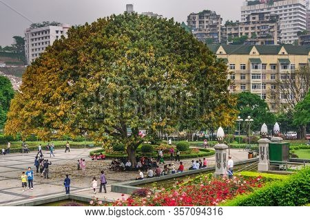 Chongqing, China - May 9, 2010: Downtown. Peoples Square With Large Tree And Red Flower Gardens. Ple