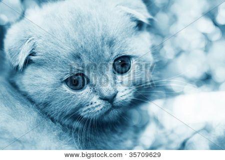 little beautiful kitten