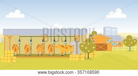 Dairy Farm For Making Qualitative Milk Product. Cow Standing In Barn, Special Device For Milking Att