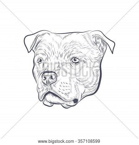 Amstaff Dog Head Hand Drawn Vector Sketch.american Staffordshire Terrier Isolated On White Backgroun