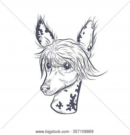 Chinese Crested Dog Hand Drawn Vector Sketch. Chinese Crested Dog Head On White Background.