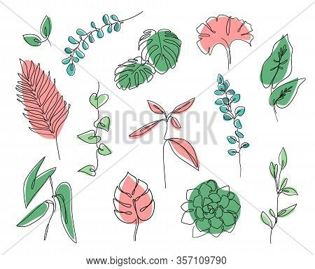 Continuous Line Leaves Print Tropical Palm, Eucalyptus, Monstera, Succulent, House Plants. Abstract