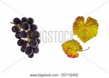 Bunch Of Ripe Merlot Grapes With Leaves Isolated On White Background