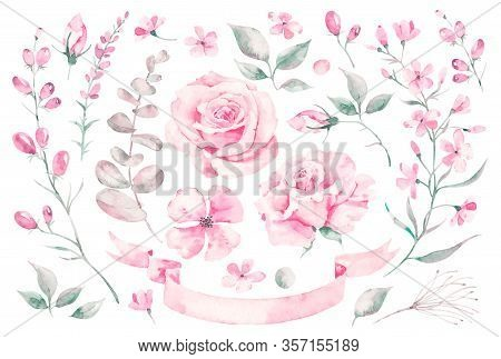 Set Vector Watercolor Elements Of Roses, Leaves. Collection Garden Pink Flowers, Leaves, Branches, P