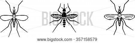 Mosquito Icon Isolated On Background  Pictogram, Risk, Sickness