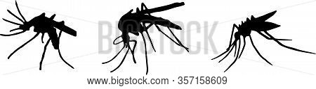 Mosquito Icon Isolated On Background , Summer, Symbol, Vector