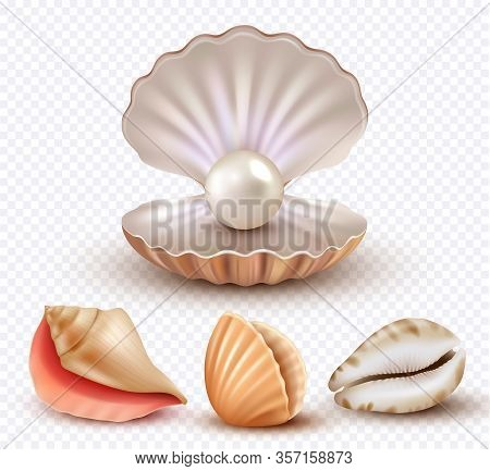Realistic Seashells. Mollusk Shells Ocean Beach Objects Luxury Pearls Open Concha Vector Collection.