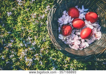 Vivid Red Colored Easter Eggs And Cherry Flowers In Brown Rattan Basket Placed On Green Grass. Easte