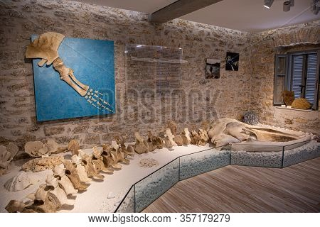 Kastos, Greece-august, 2019:marine Museum Exposition Of Remains Of The Fin Whales Entire Vertebrate