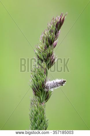 Close Up Of A Blade Of Grass With Special Grain
