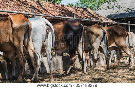 Livestock Farming That Produces Methane Gas Into The Atmosphere, Which Is A Greenhouse Gas, Affects