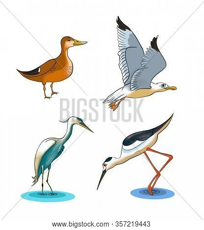 Cartoon drawing of some wetlands birds, including a mallard, seagull, black-winged stilt and little egret. Digital illustration with clipping path.