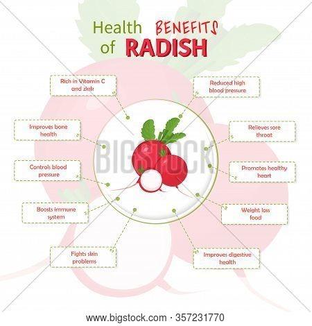 Health Benefits Of Radish. Radish Nutrients Infographic Template Vector Illustration