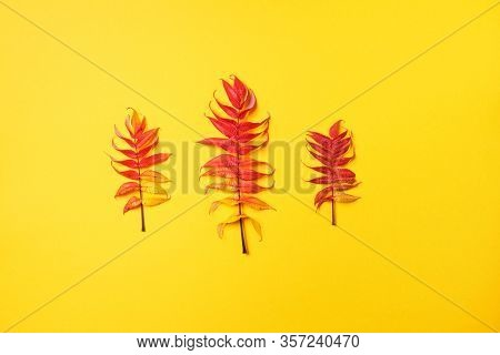 Red, Green And Yellow Autumn Tree Leaves Over Yellow Background. Top View. Copy Space. Branch Of Sta