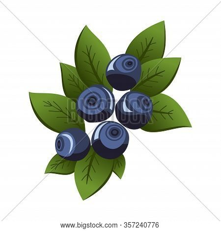 Hand Drawn Branch Bilberry Berries With Leaves. Fresh Summer Berries. Fruit Botany Cartoon Vector Il