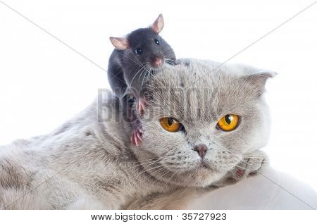 cat and mouse together isolated on a white background