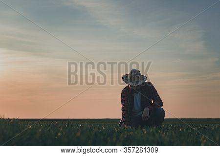 Agronomist In Wheat Crop Field Analyzing Wheatgrass, Farm Worker Working In Springtime Sunset, Selec