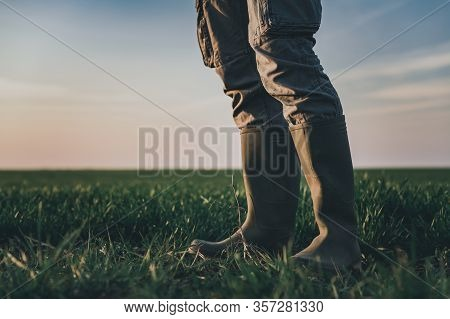 Farmer Wearing Rubber Boots Standing In Wheatgrass Field, Selective Focus