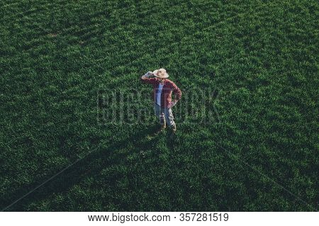 Wheat Farmer Standing And Looking Over Wheatgrass Field, Aerial View Of Adult Male Farm Worker Exami