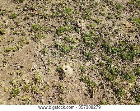 Solitary Bee Dirt Mound And Grass And Dirt