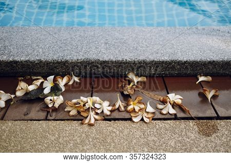 Wilted Plumeria Flowers With Copy Space Near A Pool In Thailand