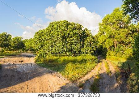 The Roads In The Tanzania, Africa, Mafia Island