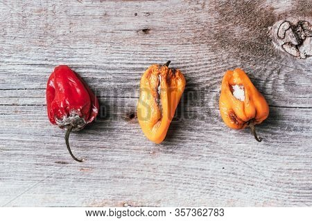 Moldy And Wrinkled Rotten Peppers. Concept Of Unhealthy, Decompose, Spoiled Vegetables. Garbage Dump