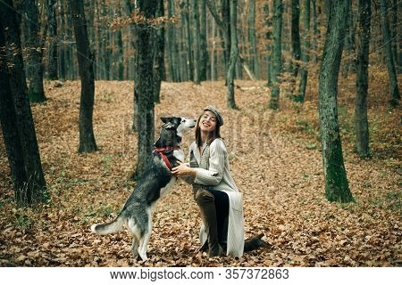 Siberian Husky Favorite Pet. Animal Husbandry. Pedigree Dog Concept. Animal Training. Beautiful Smil