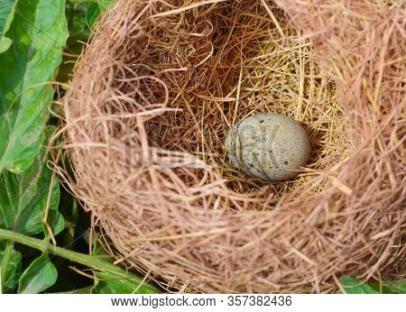 Close Up Of An Egg In Nest In A Garden.beautiful Egg And Nest.