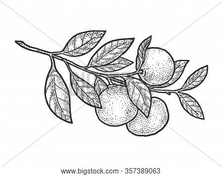 Mandarin Orange Plant Sketch Engraving Vector Illustration. T-shirt Apparel Print Design. Scratch Bo