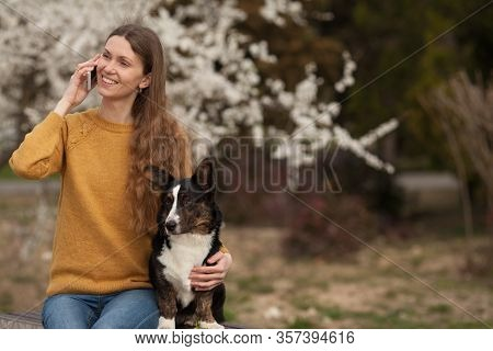A Beautiful Girl In A Yellow Sweater Is Talking On A Mobile Phone Smiling, Walking Her Dog Welsh Cor